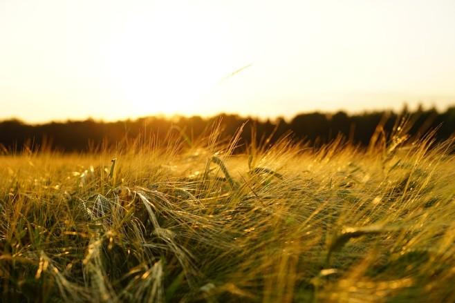 Jak nabyć działkę rolną?