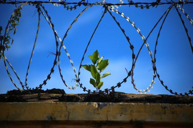 Skrócenie kary ograniczenia wolności